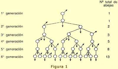 EL BRAZO DE ORION: Fibonacci, la proporción áurea