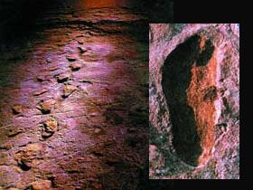 Laetoli ayak izleri (İnsan ayak izleri)