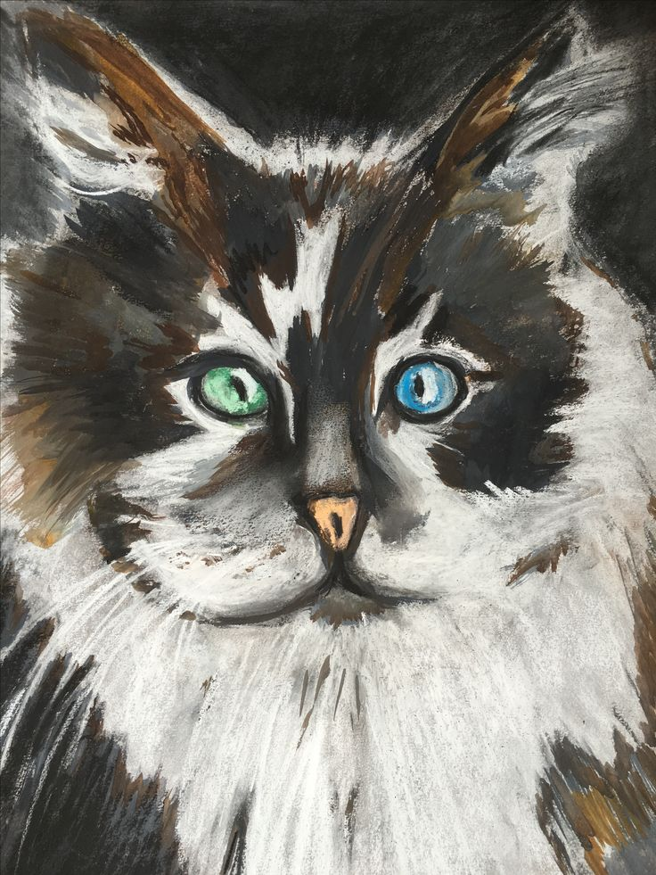 A pastel portrait I did of a green and blue eyed cat.