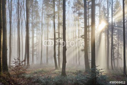 Photo: Sun rays through the foggy forrest