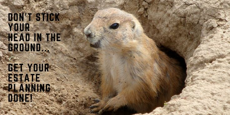 Happy Groundhog day! Don't stick your head in the ground...get your estate planning done!