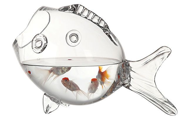I have to have this!: Goldfish Bowl, Decor, Stuff, One King Lane, Fishbowls, Glasses Fish, Glasses Bowls, Fish Bowls, Products