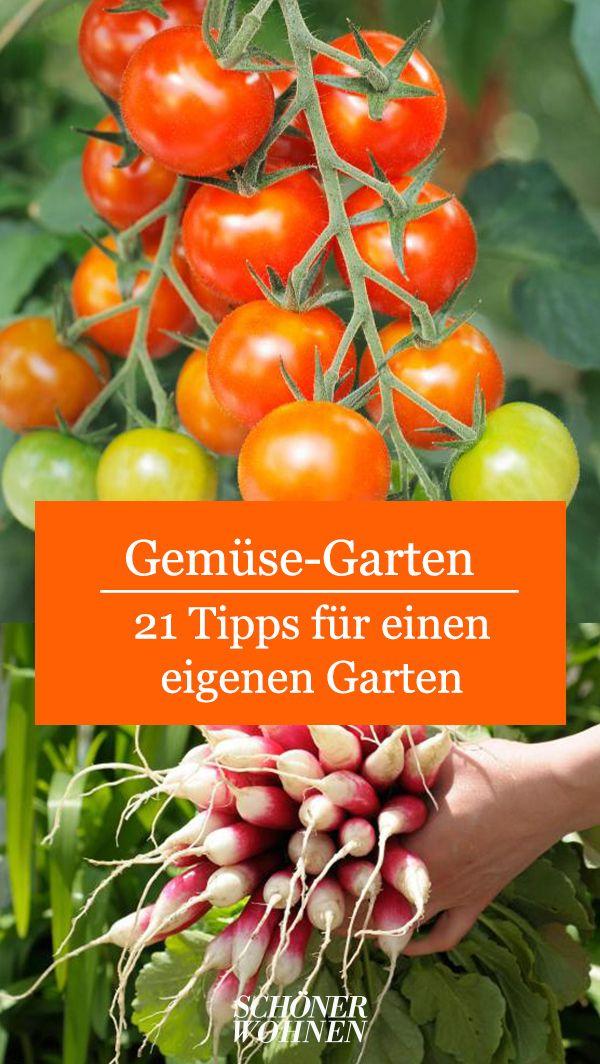 Tomaten Solanum Lycopersicum Bild 5 In 2020 Tom Garten Garten Garten Terrasse