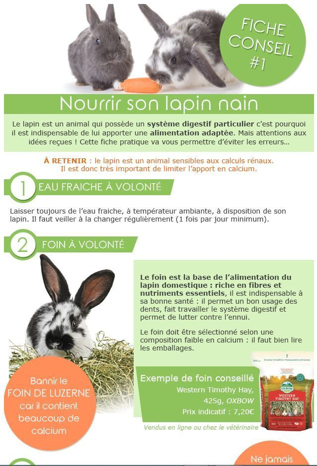 Comment S'occuper D'un Lapin Nain : comment, s'occuper, lapin, Welcome, #lapin, #Elevage, #nins, #Teddys, Quotes, Pets,, Names