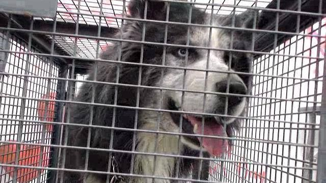 Petition Update · DEVORE, CA 2019-03-05 11 DOGS THE EUTH