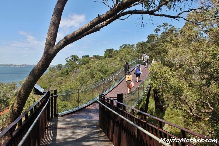 Walking amongst the Tree tops in Kings Park, Perth, Australia