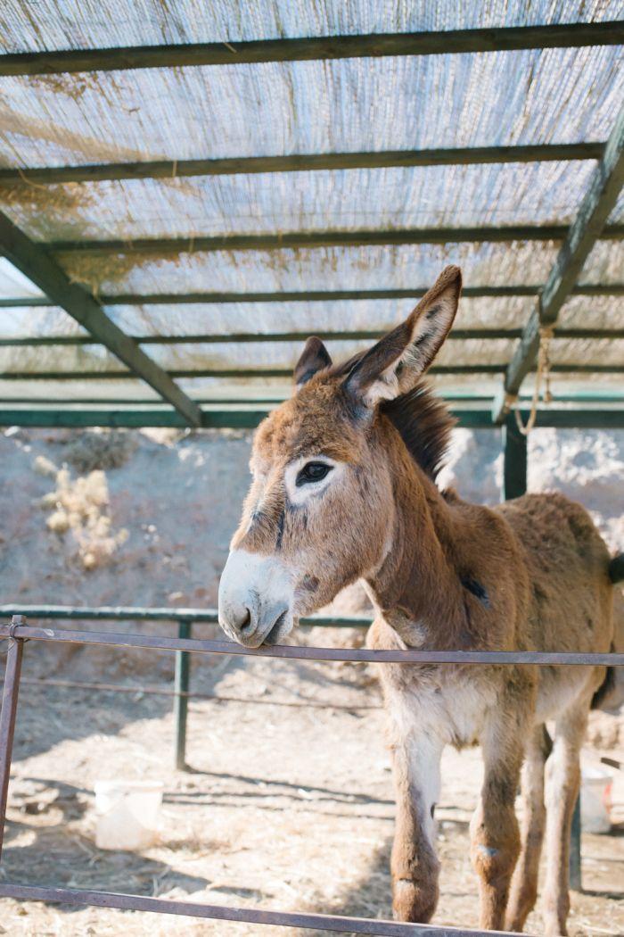 Donkey in Kos Island Greece | photography by  http://www.elisabettamarzetti.com/
