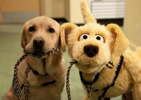 Adorable service dog and friend! http://igg.me/at/panic-dog/x/8247359