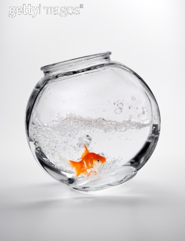 Falling fish bowl fish bowls pinterest for Fish bowl pictures