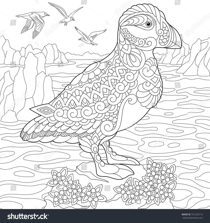 Coloring Page Of Puffin Seabird Northern And Arctic Waters Freehand Sketch Drawing For