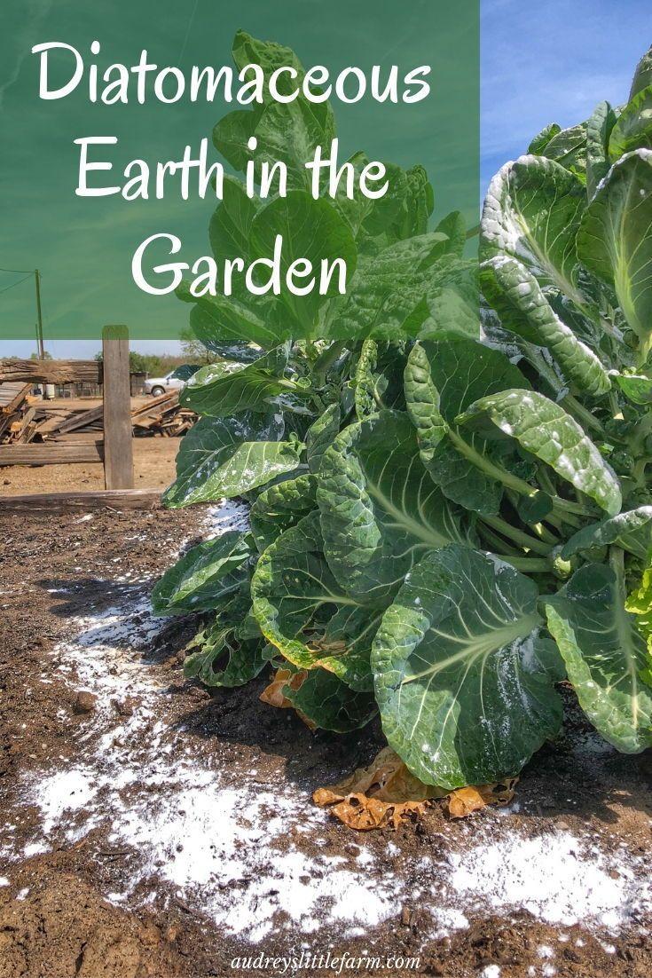 Simple Effective Diatomaceous Earth Garden Uses Diatomaceous