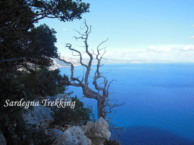 Sardegna.......Particolari che la rendono unica...... http://sardegnatrekking.wordpress.com/