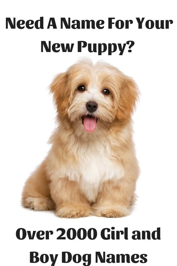 2000 Popular Cute And Unique Names For Your Pets Dog Names Dogs