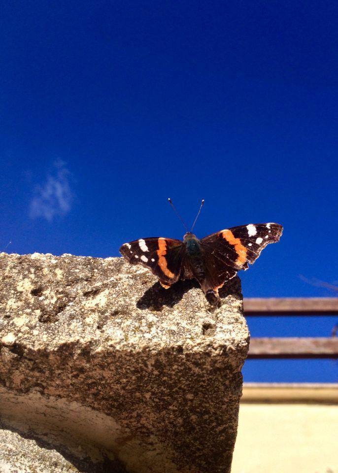La #farfalla nel blu dipinto di... vero!