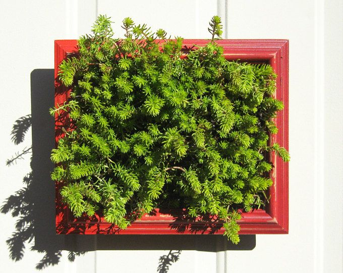Marco jardinera vertical, jardinería vertical, plantador de la plataforma, plataforma hierba jardín, jardín vertical bricolaje, bricolaje jardín vertical, plantadores de cerca