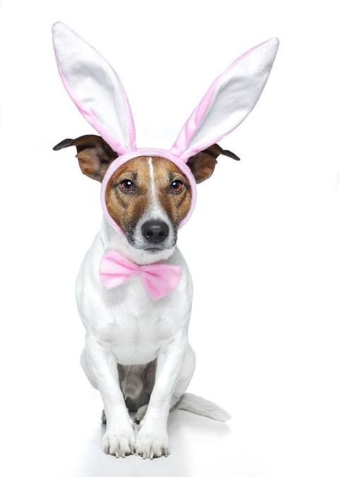 30 best hoppy easter easter ideas for dogs images on pinterest pet photo with easter bunny north attleborough ma negle Images