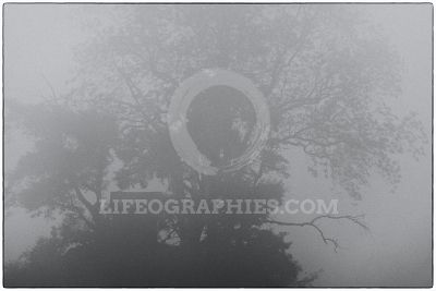 Mystical shape of a house under the tree covered by fog
