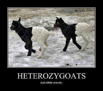 MENDELIAN GENETICS UNIT: LESSON 4: HOMOZYGOUS & HETEROZYGOUS ... 2