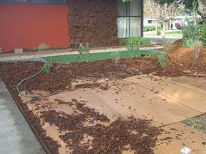 smother and replace your lawn with mulch landscaping ideasbackyard