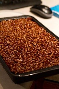 Chocolate Rice Lunch Box Treats~  : Chocolate, Dairy Free, Glutenfree, Kids Food, Recipe, Wheat Free