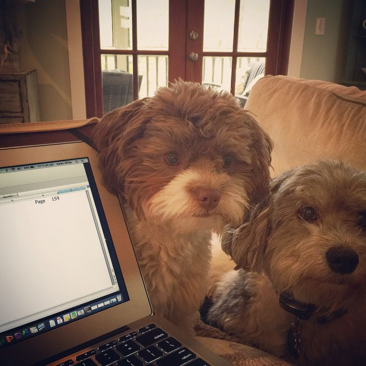 "My writing ""helpers""."