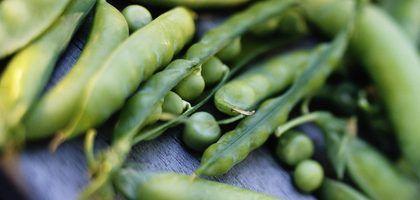 Como plantar feijão verde e ervilhas em vasos | eHow Brasil