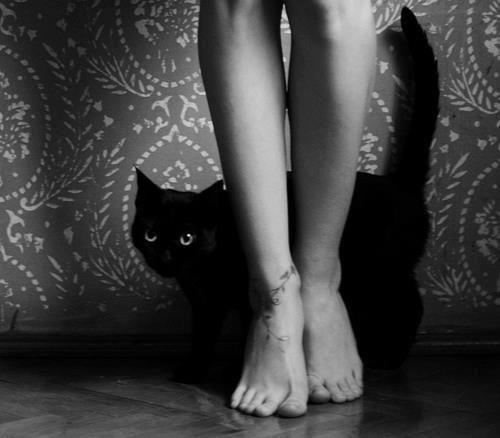 Lei giocava con la sua gatta e che meraviglia era vedere la bianca mano e la bianca zampa trastullarsi nell'ombra della sera! Lei nascondeva - la scellerata - sotto i guanti di filo nero le micidiali unghie d'agata taglienti e chiare come un rasoio. Anche l'altra faceva la smorfiosa e ritraeva i suoi artigli d'acciaio, ma il diavolo non ci perdeva nulla e nel boudoir, in cui tintinnava, aereo, il suo riso, scintillavano quattro punti fosforescenti.