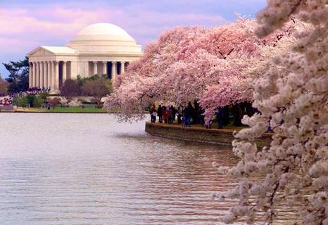 Cherry blossom Festival in Washington. One way ticket, please?