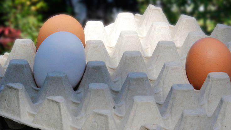 Lidlin munantoimittaja: Jos kaikki suomalaiset ryntäisivät ostamaan luomu- ja lattiakananmunia seurauksena olisi munapula