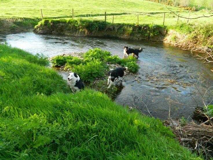 From Clodagh Breen farm near Camolin.