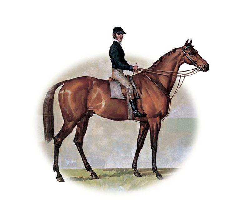 Archer (AUS) 1856 B.h. (William Tell (GB)-Maid Of The Oaks