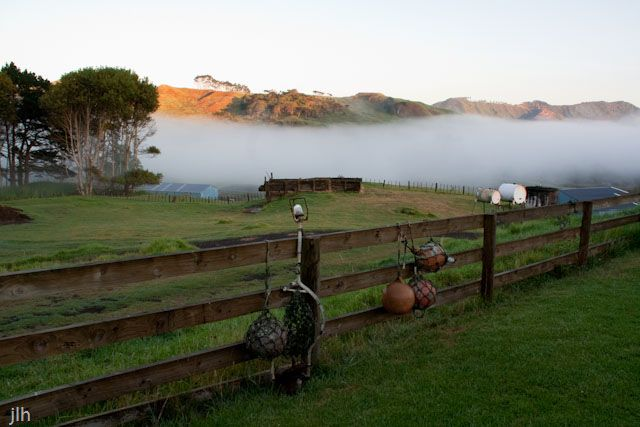 This photo was taken during our recent visit to the Far North of #NewZealand. It is not your usual summer shot, but early in the morning, the hot and cold air mixed and this is what we got.