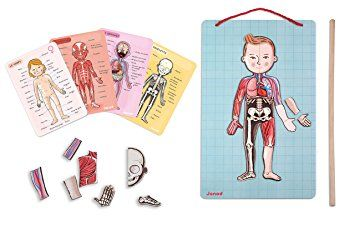 Janod - Bodymagnet, juego de anatomía magnético (7-12 años)