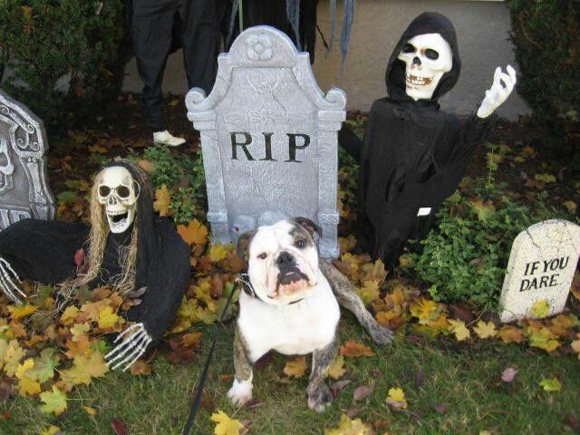 halloween decorations minus romo the bulldog