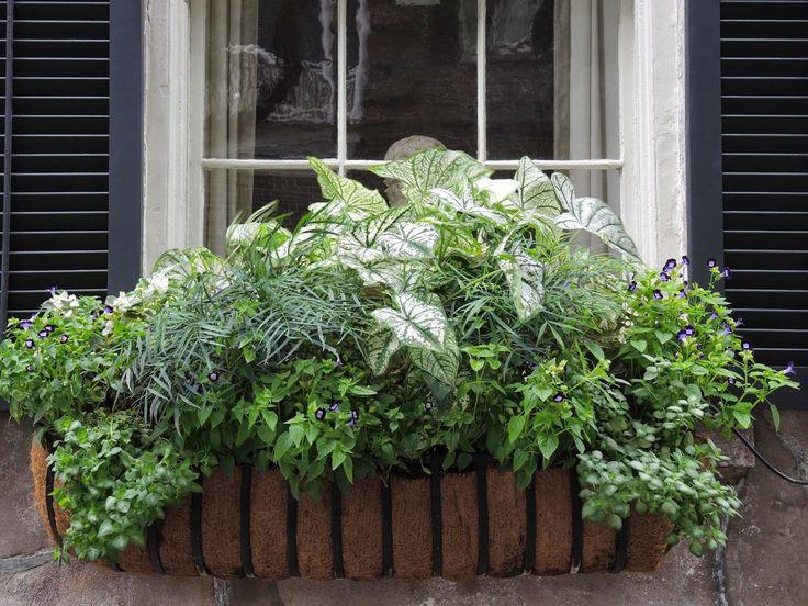 all green window box shade ferns caladiums - Window Box Planters