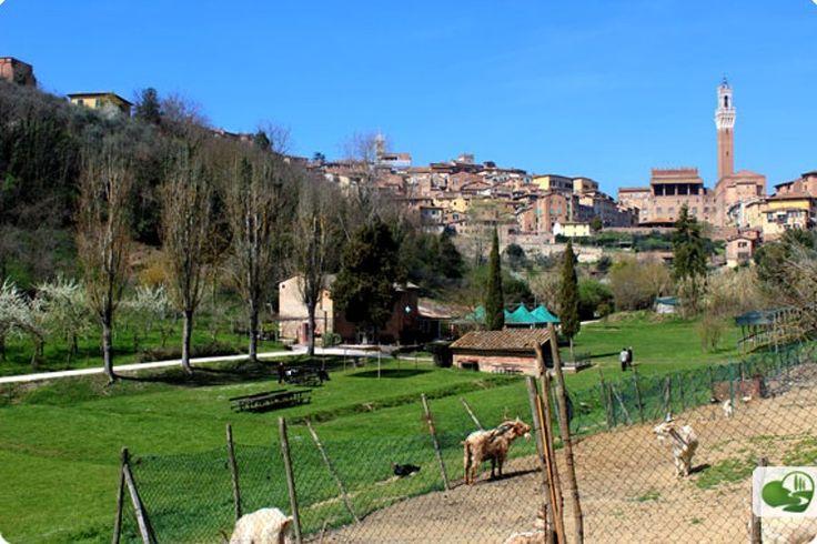 Visitare Siena con Bambini: Parco giochi, Musei e Piscine Dove Andare con I…
