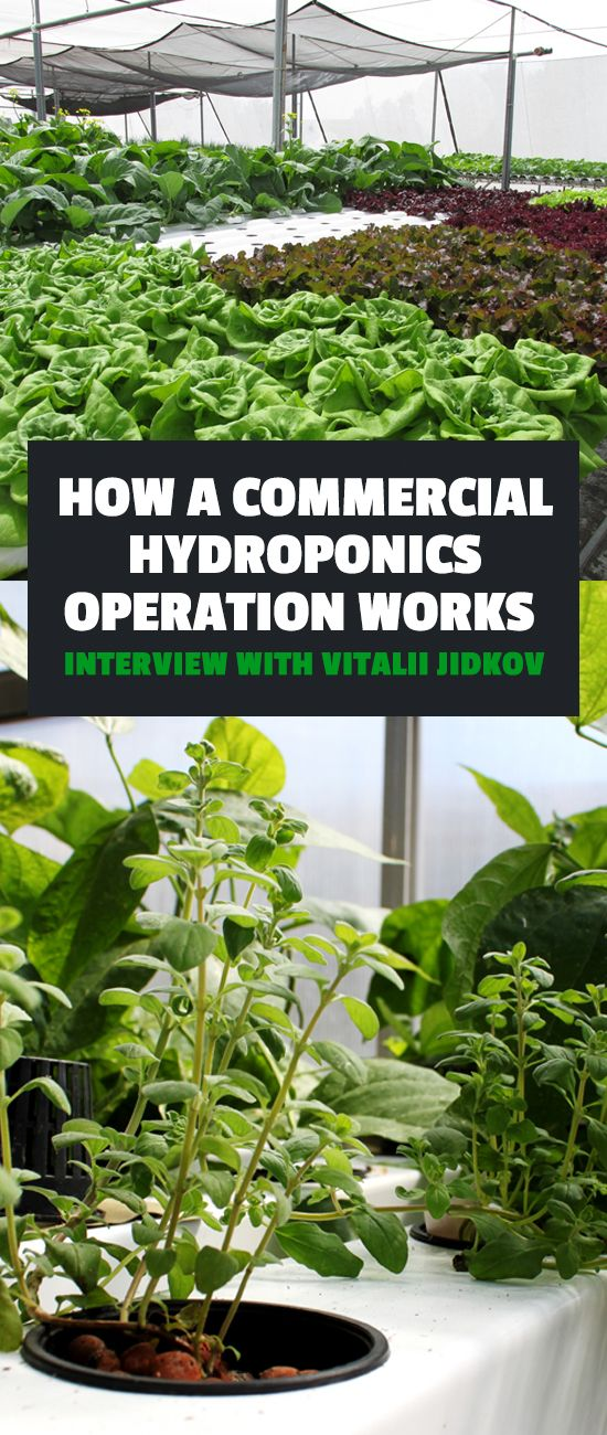 Learn how a commercial hydroponics operation works in this hour long interview with Vitalii Jidkov, a commercial grower in Canada.