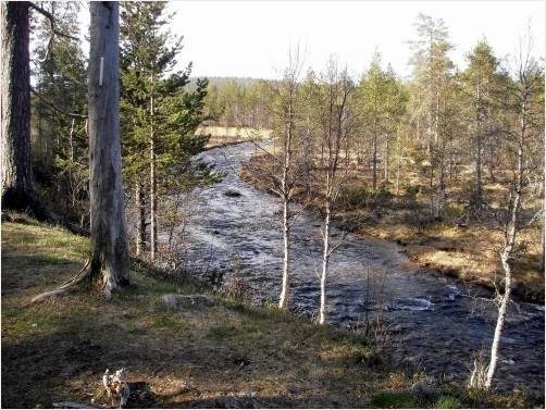 River in Lapland Finland, one of the 3 we walked along when we hiked in June 2012.