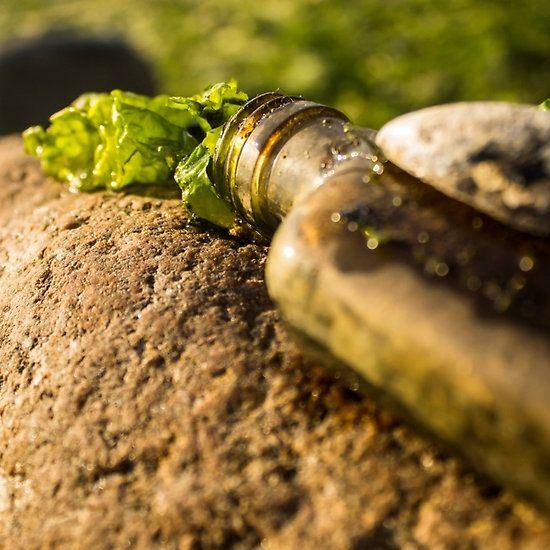 Sea shell on a Sea flask