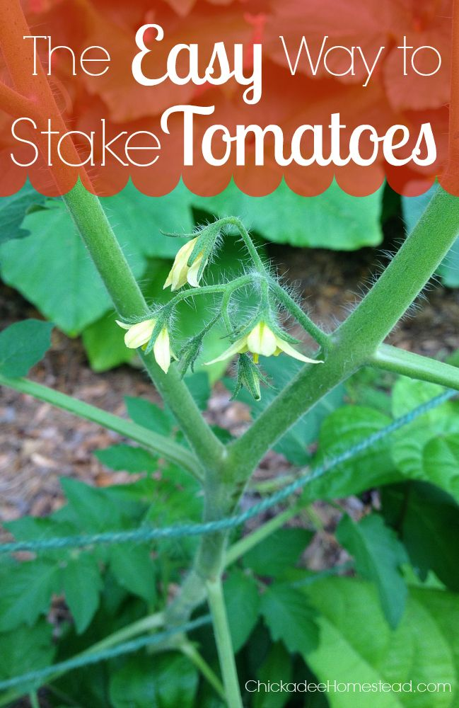 The Easy Way to Stake Tomatoes - Chickadee Homestead