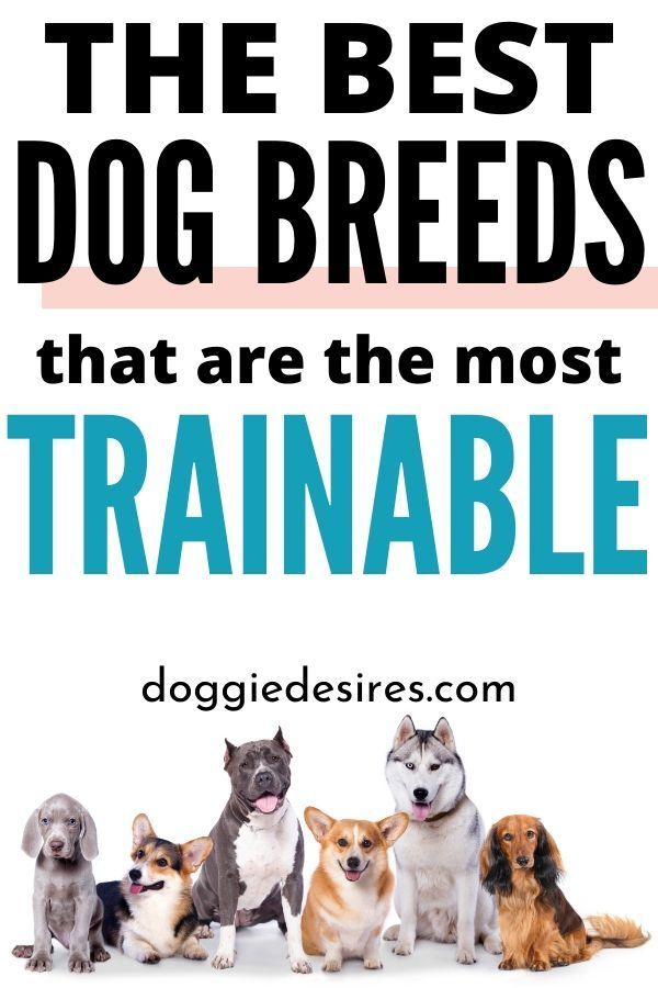 The Top 4 Most Trainable Dog Breeds Right Now For Dog Owners Dog