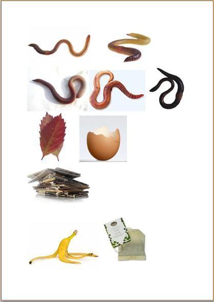 Fem små maskar gav sig iväg för att leka en solig dag  En mask hittade ett bananskal och tog det med sig hem.    Fyra små maskar gav sig ivä...