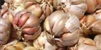 Garlic for Tick Control in the Yard | eHow.com