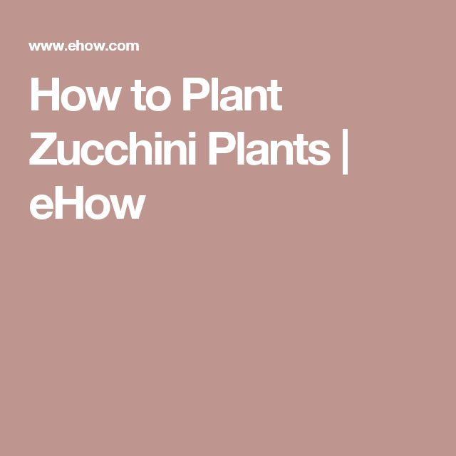 How to Plant Zucchini Plants | eHow