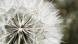 Free stock photo: Dragonfly Wing, Nature, Close - Free Image on Pixabay - 615240