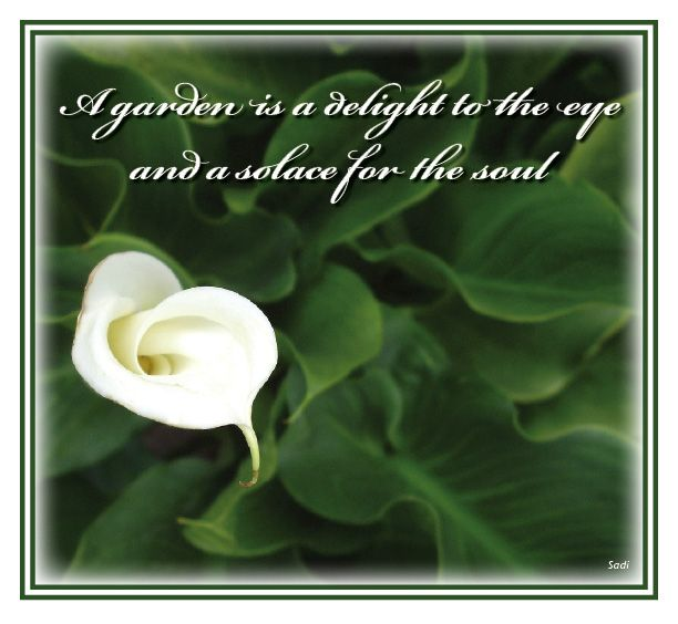 What Is The Spiritual Meaning Of White Lily Google Search