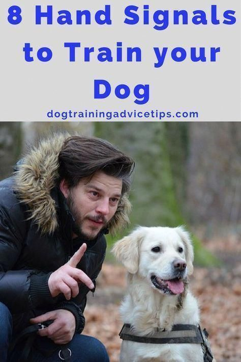 Low Cost Dog Grooming Near Me CanDogsEatApples Training