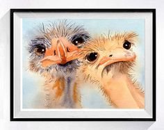 Twee domme vrienden - Goofy vogel serie No. 1 - twee domme uitziende vogels, deze grappige struisvogels komen uit Australië, maar veel boerderijen in de