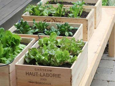 8 best Orto sul balcone images on Pinterest | Vegetable garden ...