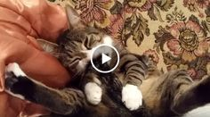 Hilarious Cats Vs Tails Video Compilation – Guaranteed to Brighten Your Day!